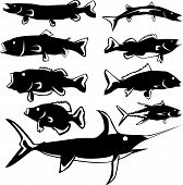 Fish Variety In Vector