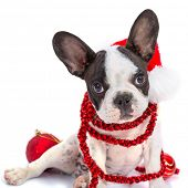 French bulldog puppy in santa hat  with present boxes over white