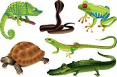 Reptiles And Amphibians Set
