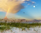 pic of sea oats  - Sea oats growing on beach with rainbow, clouds and full moon in background at sunrise