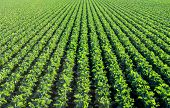 stock photo of e coli  - The rich green agricultural fields in California before the harvest - JPG