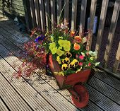 Wooden Wheel-barrow Full Of Flowers.