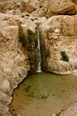 picture of jericho  - While hiking in En Gedi National Park I spotted one of the falls pouring down in a beautiful pool area perfect for a swim - JPG