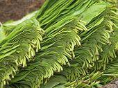 betel leaf at Market place india
