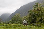 Inside Waipi'o Valley On Hawaii