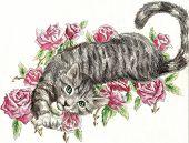 Tabby Rose