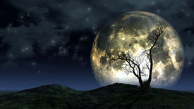 stock photo of moon silhouette  - Spooky silhouette of a tree against a large moon in a night sky - JPG