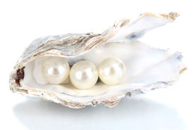image of pearl-oyster  - Open oyster with pearls isolated on white - JPG