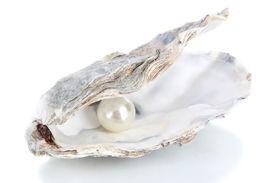 picture of pearl-oyster  - Open oyster with pearl isolated on white - JPG