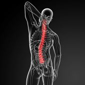 stock photo of lumbar spine  - 3d render Human Spine Anatomy  - JPG