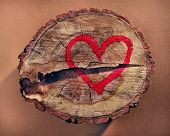 Love and save nature, red heart drawn on a tree trunk.