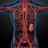 foto of nod  - 3d render lymphatic system  - JPG
