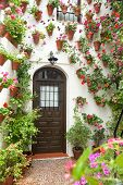 pic of geranium  - Spring and Easter Flowers Decoration of Old House - JPG