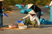 People Dry Corn Of Good Crop