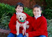 stock photo of dog christmas  - Two young boys holding their Christmas golden retriever puppy - JPG