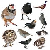 Group Of Wild Birds