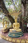Statues Of Buddha Under An Old Tree In Vientiane