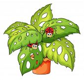 Illustration of a plant with ladybugs on a white background