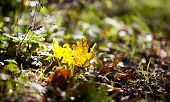 Colorful Yellow Autumn Leaf On A Forest Floor
