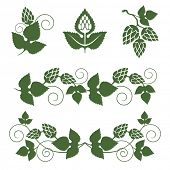 stylized hop  borders and design elements