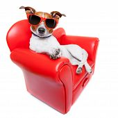 foto of couch potato  - dog sitting on red sofa relaxing and resting while chilling out - JPG