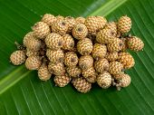 Group Rattan Fruit.