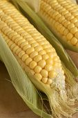 stock photo of maize  - Freshly picked maize or corn ears in their husks - JPG