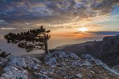Sunset Landscape On A High Mountain Overlooking The Sea And Curly Pine. Crimea.
