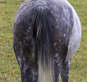 White, Speckled Horse Shows Its Back