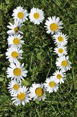 stock photo of alphabet letters  - letters of daisies on the green grass background - JPG