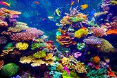 stock photo of blue animal  - Coral Reef and Tropical Fish in Sunlight - JPG