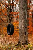 stock photo of tire swing  - tire swing in the woods in autumn - JPG