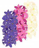 Hyacinth Design