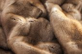 foto of mink  - Product from fur of a pastel mink - JPG
