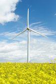 Wind Turbine In Field Of Oil Seed Rape