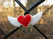 stock photo of chain link fence  - Red heart with wings glass magnet centered on a black chain link fence, against backdrop of trees and leaves. 