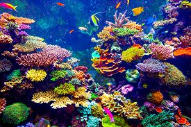 picture of aquatic animals  - Coral Reef and Tropical Fish in Sunlight - JPG