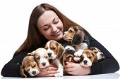 image of puppy beagle  - The happy  woman and big group of a beagle puppies on white background - JPG