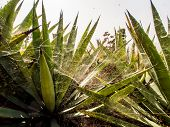 stock photo of spiky plants  - Spider web on plants - JPG