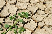 image of survival  - The last plants survival in the dryness land - JPG