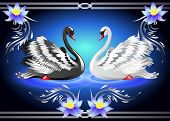picture of black swan  - Elegant white and black swan on blue background with lilies - JPG