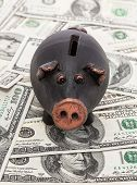 foto of fantail  - Black pig piggy bank stands on 100 dollar bills - JPG