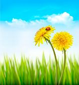 picture of ladybug  - Dandelion on a blue sky and green grass background with a ladybug - JPG