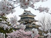 picture of shogun  - matsumoto castle during cherry blossom  - JPG