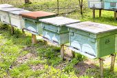 picture of beehive  - Apiary with bee beehives on the of mountain - JPG