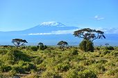 pic of kilimanjaro  - Mount Kilimanjaro in Kenya Amboseli National Park