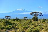 picture of kilimanjaro  - Mount Kilimanjaro in Kenya Amboseli National Park  - JPG