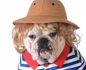 stock photo of wig  - dog wearing clothing  - JPG
