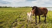 foto of foal  - A proud mare poses with her newborn foal at the end of a sunny day in the spring season - JPG