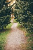image of conifers  - Small footpath in park between conifer trees  - JPG